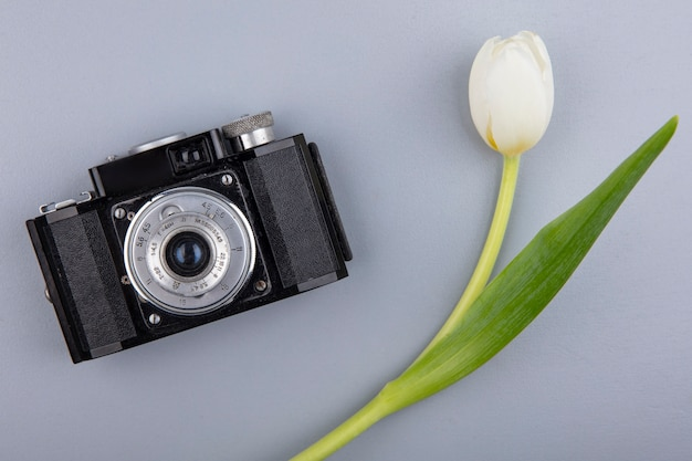 Top view of photo camera and flower on gray background