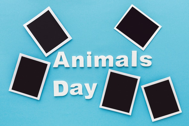 Top view of photos for animal day