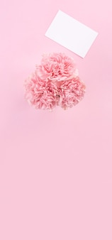Top view of pink carnation on pink table background
