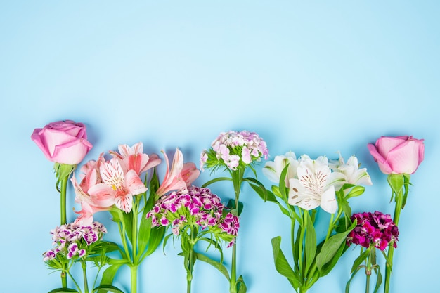 Top view of pink color roses and alstroemeria flowers with turkish carnation on blue background with copy space