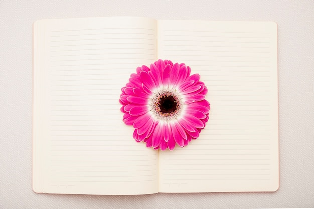 Top view pink daisy on notebook