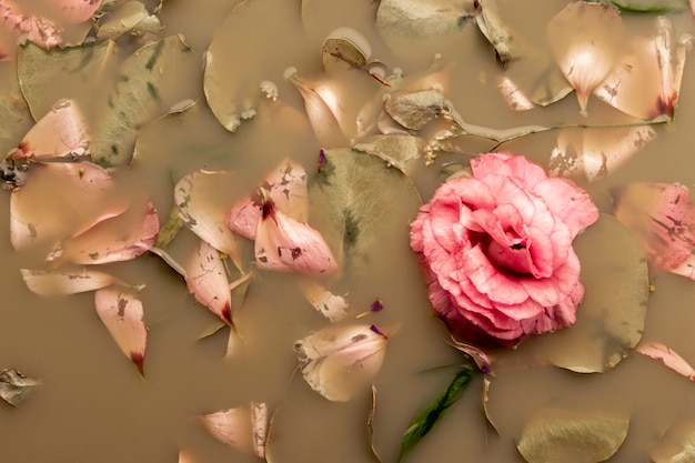 Top view pink rose in brown colored water