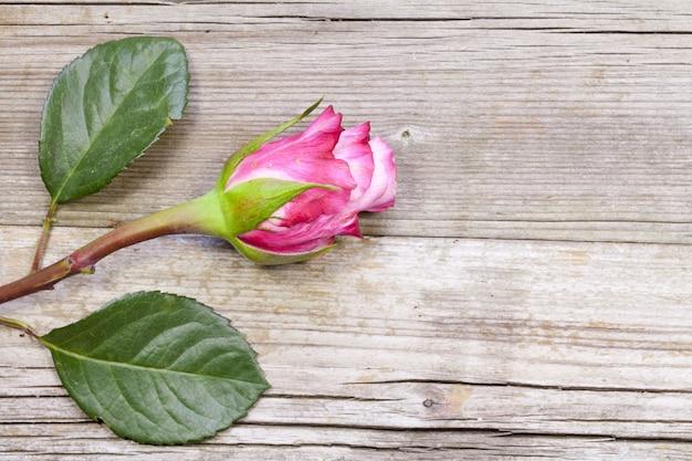 Vista dall'alto di una rosa rosa su una superficie di legno - perfetta per la carta da parati