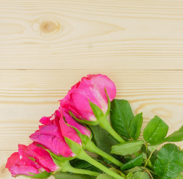 Top view pink roses on beige wooden with copyspace