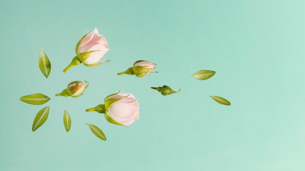 Top view of pink spring roses with leaves