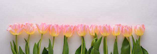 バナーの白い背景の上の黄色の色合いと行のトップビューピンクのチューリップ