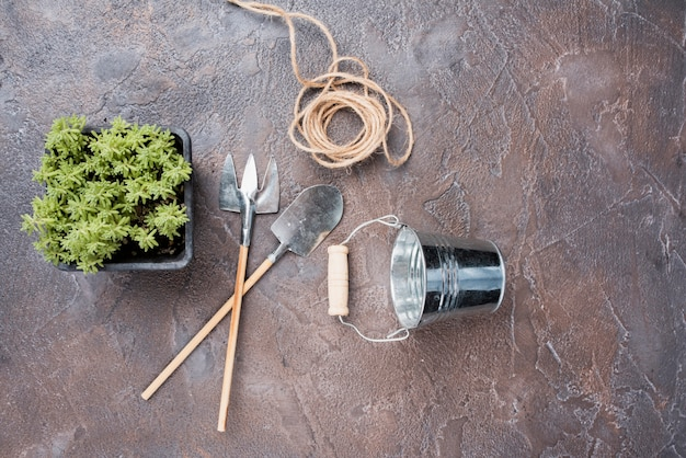 Top view of plant and gardening tools