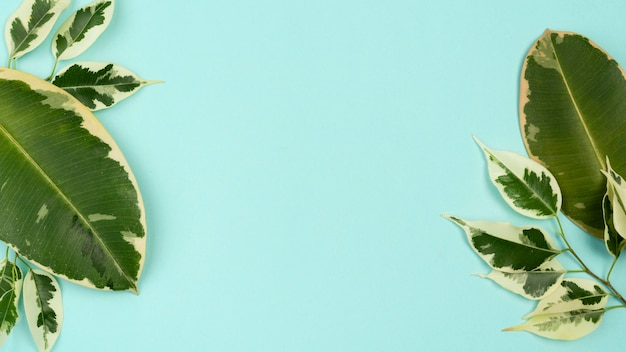 Vista dall'alto di foglie di piante con copia spazio
