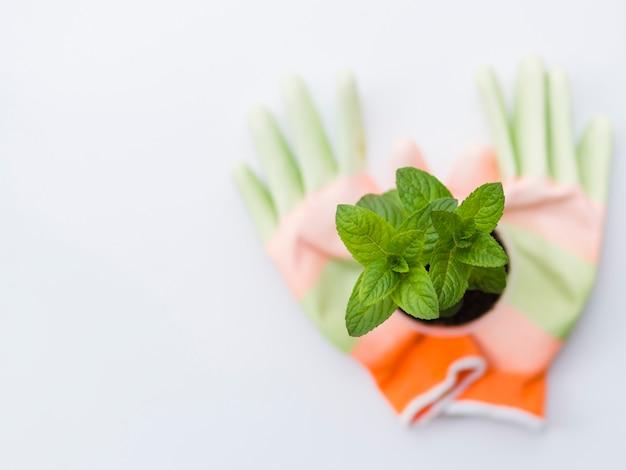 手袋とトップビューの植物