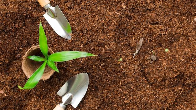 Вид сверху растение с лопатами
