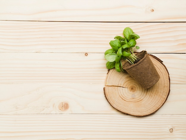 Top view plant on wooden table