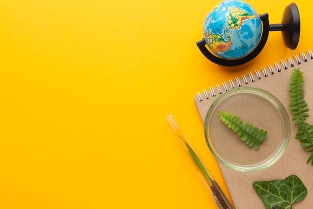 Вид сверху растения и рамка земного шара