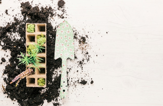 Top view of plants in peat tray and gardening showel on soil over wooden background
