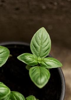 Top view plants in pot