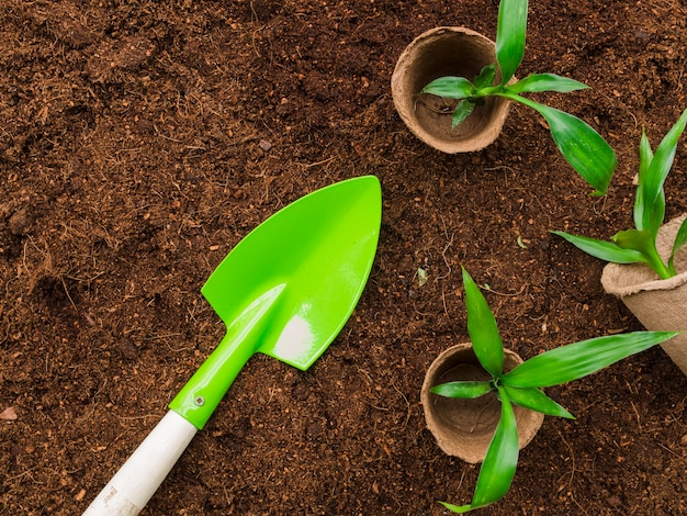 Top view plants with shovel