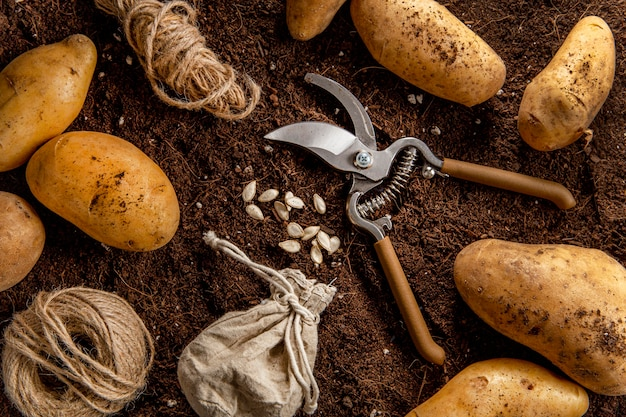 Top view of potatoes with scissors and string