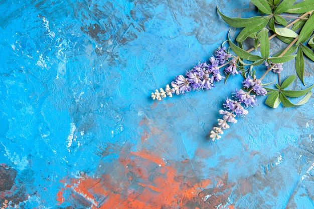 Top view of purple flower branch on blue surface