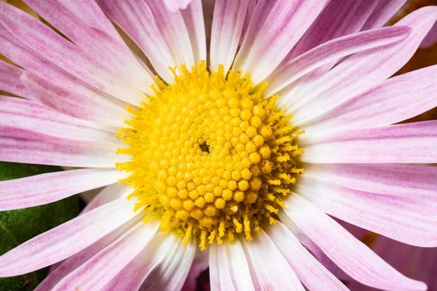 상위 뷰 보라색 꽃 매크로 자연