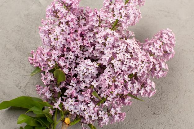 Вид сверху фиолетовые цветы живые красивые изолированные на сером полу