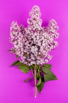 Вид сверху фиолетовые цветы красивые, изолированные на розовом фоне