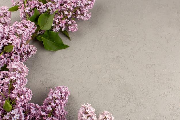 Вид сверху фиолетовые цветы красивые на сером фоне