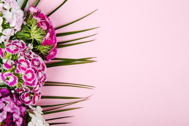 Top view of purple and white color sweet william or turkish carnation flowers isolated on palm leaf on pink background with copy space