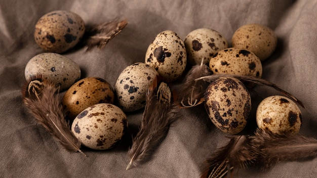 Top view quail eggs and feathers