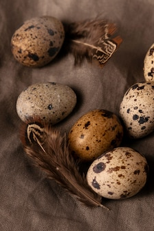Top view quail eggs with feathers