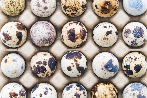 Top view of quail eggs