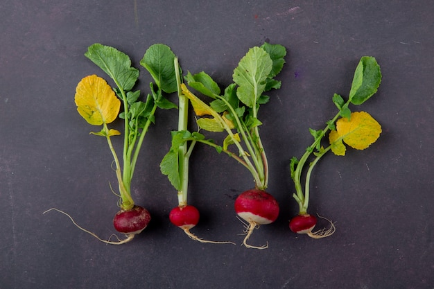 Top view of radishes on maroon background