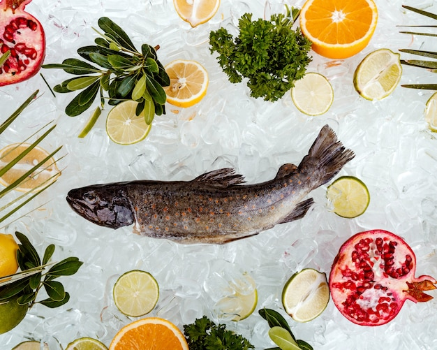 Top view of raw fish placed on ice surrounded with fruit slices ___