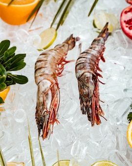 Top view of raw prawns placed on ice surrounded with fruit slices
