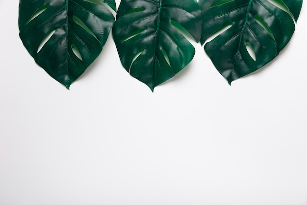 Top view realistic leaves copy-space