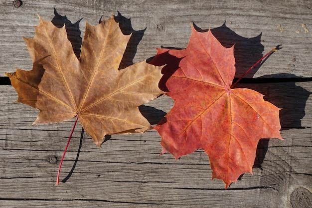 素朴な木製のカエデの上面図赤と茶色の紅葉