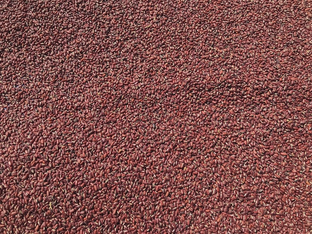 Top view of  red beans on the ground on sunny day background.