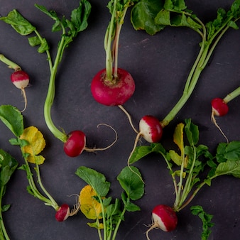 Top view of red radishes on maroon background