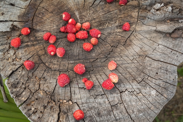 Top view of the ripe berries of wild strawberries on a stump