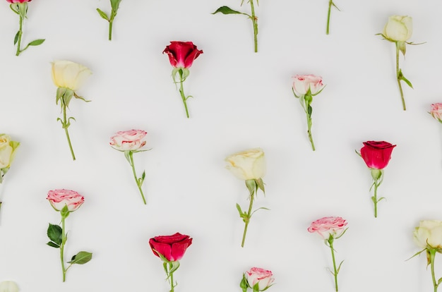 Top view of rose assortment