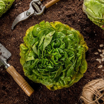 Top view of salad with garden tools