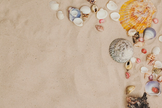 Top view of sand surface with seashells