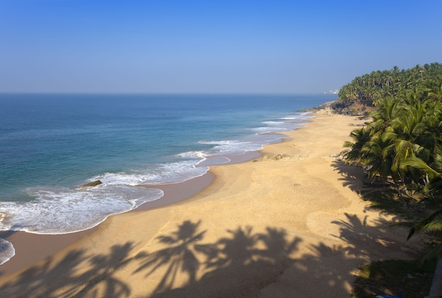 Top view on a sandy beach of the sea and a palm tree. india