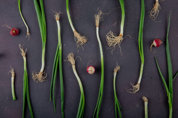 Top view of scallions with radishes on maroon background