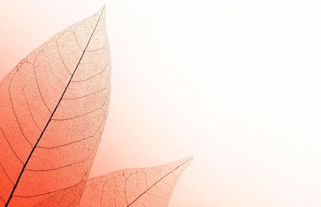 Vista dall'alto della trama di foglie trasparenti con spazio di copia