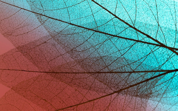 Top view of see-through leaves texture