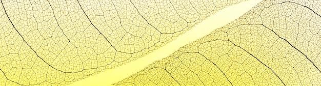 Vista dall'alto delle foglie trasparenti