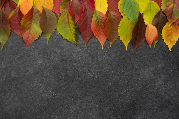 Top view of selection of autumn leaves with copy space