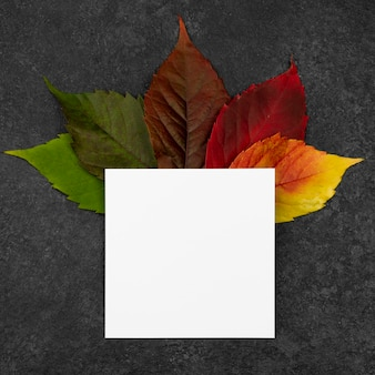 Top view of selection of fall leaves with paper