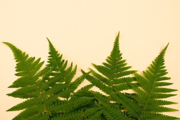 Top view of selection of fern leaves