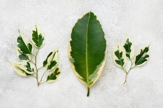 Top view of selection of plant leaves
