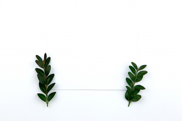 Top view on a sheet of paper and a green twig with leaves. hero image and copy space